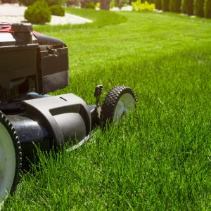 How Often Should You Cut Your Grass In The Summer?