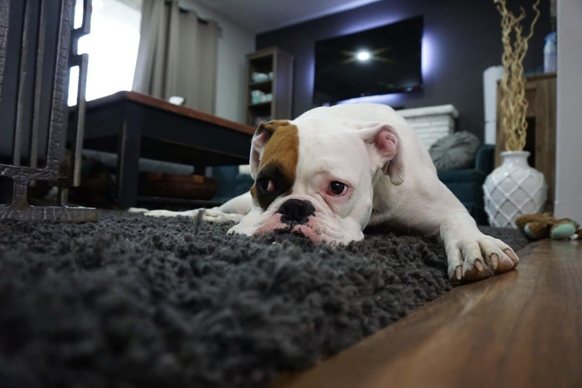 Is Professional Carpet Cleaning Better Than Doing It Yourself?